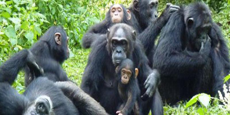 Ultimate-Big-Game-Safari-&-Gorilla-Trekking