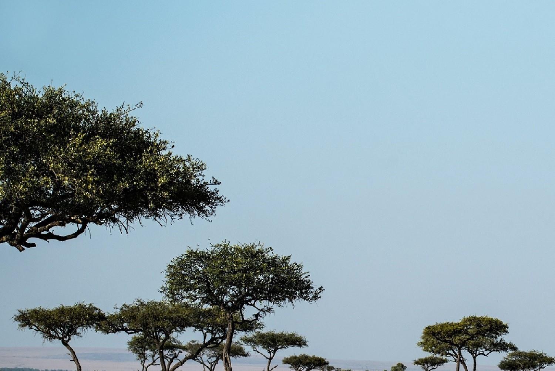 Best Kenya safari tours